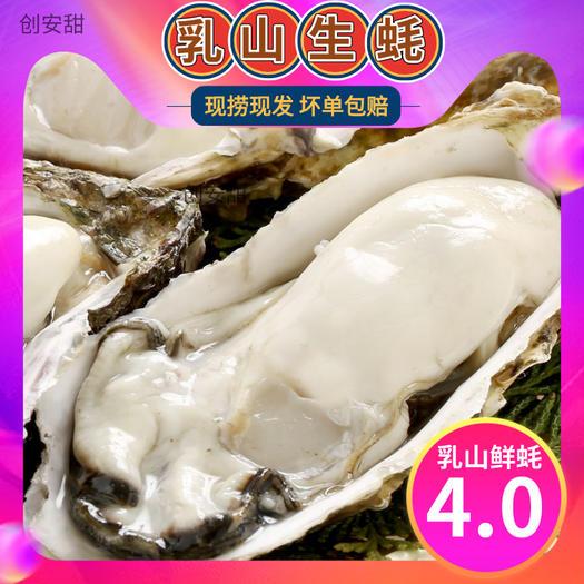 山东乳山生蚝牡蛎海蛎子海鲜水产鲜活新鲜一箱五斤包邮