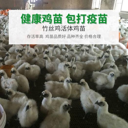 廣東省廣州市白云區 大種竹絲雞苗 包打疫苗 運輸包活 成活率99%