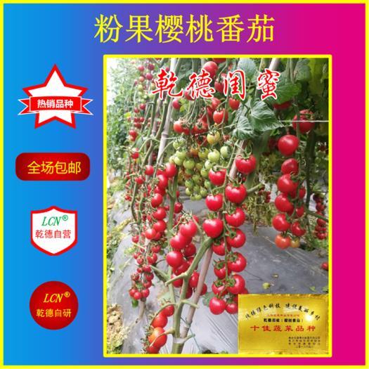 山東省濰坊市壽光市櫻桃番茄種子 乾德閨蜜粉果櫻桃番茄好品種,口感好,抗病產量高