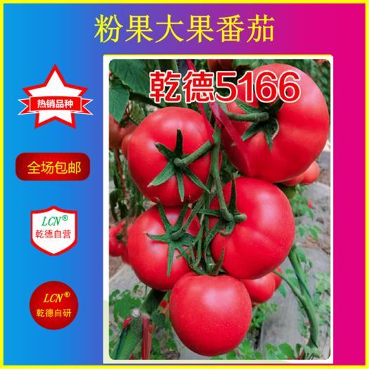 山東省濰坊市壽光市 乾德5166、越冬早春精品粉果番茄種子