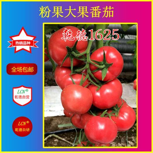 山東省濰坊市壽光市 乾德1625粉果番茄種子,早熟品種,早春栽培,抗病好產量高