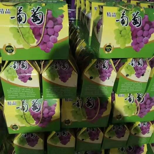 河北省石家莊市晉州市 河北石家莊 晉州巨峰葡萄 5斤 禮品盒 葡萄產地批發
