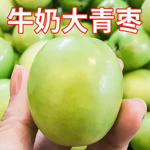 福建省漳州市平和縣 福建漳州平和牛奶青棗大青棗新鮮采摘棗子產地直發非貴妃蘋果棗
