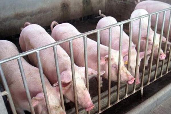 今日全国毛猪的涨跌表(附生猪行情分析)