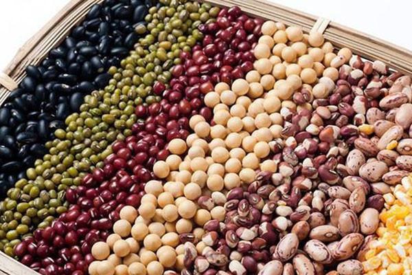 赤豆种子如何挑选?育苗方法有哪些?