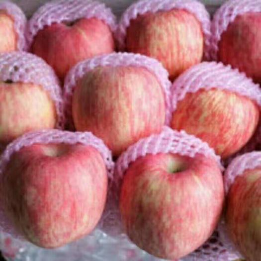 山東省臨沂市沂水縣長富2號蘋果 75mm以上 條紅 紙袋