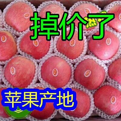 山東省臨沂市沂水縣長富2號蘋果 75mm以上 片紅 紙袋
