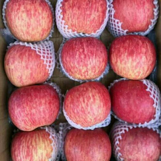 山東省臨沂市沂水縣長富2號蘋果 75mm以上 片紅 紙+膜袋