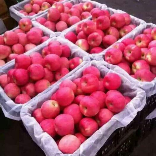 山東省臨沂市沂水縣 山東蘋果 脆甜好吃 不貴