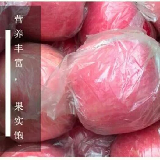河南省三門峽市靈寶市靈寶蘋果 紙+膜袋 條紅 75mm以上