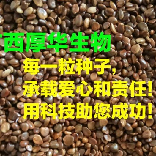廣西壯族自治區桂林市龍勝各族自治縣黑老虎種子 紫紅巨果,第四代選育品種