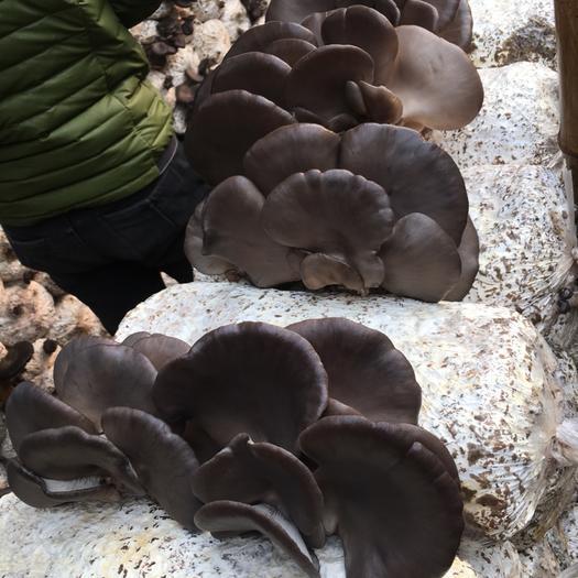 河北省邯郸市肥乡区蘑菇