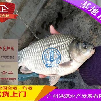 中科三号鲫鱼 人工养殖 0.05公斤