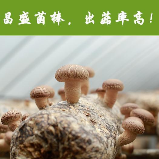 河南省三门峡市灵宝市香菇菌种