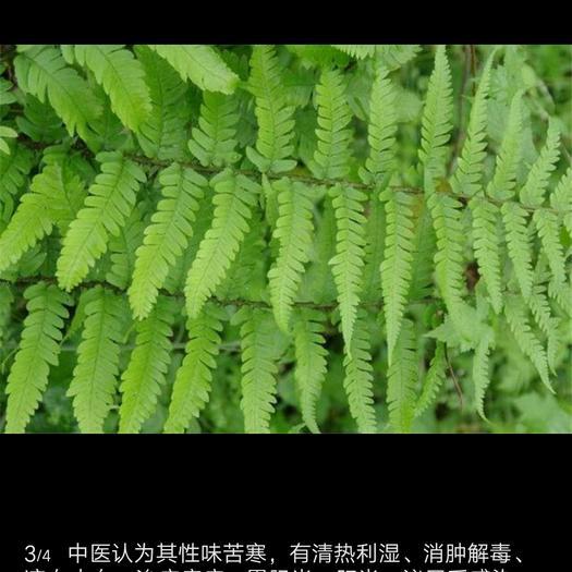 重庆市彭水苗族土家族自治县生态草鱼 野生 1-1.5公斤