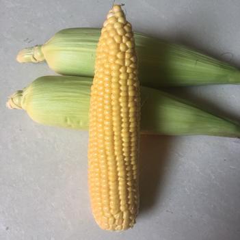 玉米笋 水果玉米