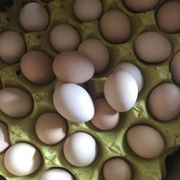 初生蛋 簡包裝 食用