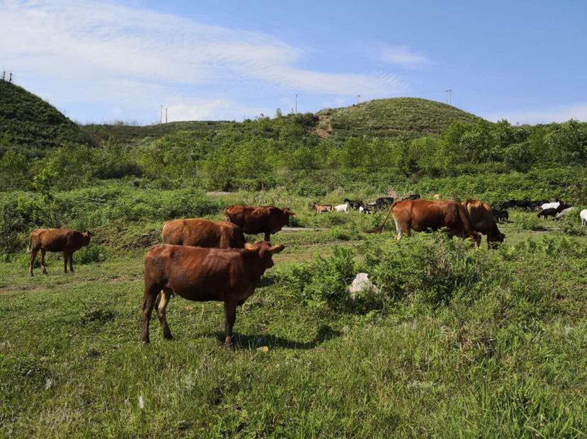 [牛肉类批发]牛肉类 生肉价格36元/斤