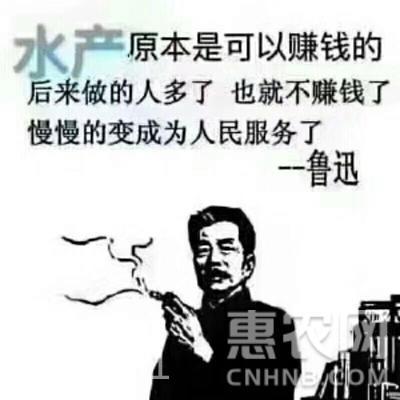 潛江小龍蝦 人工養殖 4-6錢