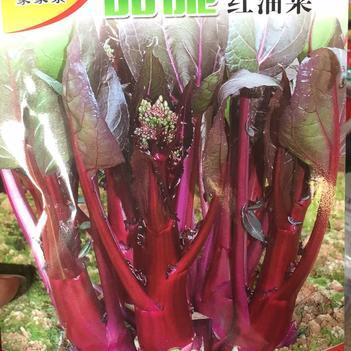 紅油菜 2~3兩