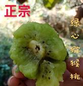 綠心獼猴桃苗 嫁接苗帶種植資料包郵