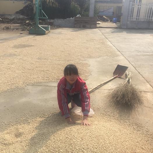 陕西省西安市莲湖区枳壳种子