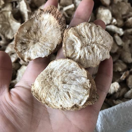 廣西壯族自治區玉林市玉州區菊苣