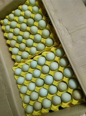 湖北省武漢市硚口區綠殼雞蛋 箱裝 食用 年夜碼雙色綠殼蛋毛重44斤左右