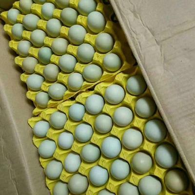 湖北省武漢市硚口區綠殼雞蛋 箱裝 食用 大碼雙色綠殼蛋凈重44斤左右
