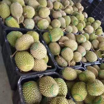 貓山王榴蓮 80 - 90%以上 3 - 4公斤