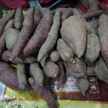 番薯 3兩以下 紫皮