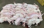 兔肉類 凈重5斤以上,大企業,值得信賴