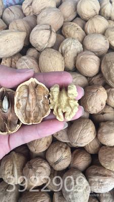 薄皮核桃 紙皮核桃5斤裝補腦補鈣佳品批發