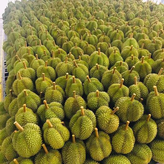 安徽省宣城市宣州區金枕頭榴蓮 3 - 4公斤 80 - 90%以上