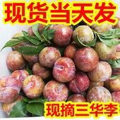 綠寶石甜瓜 新鮮紅心三華李 李子 現摘現賣