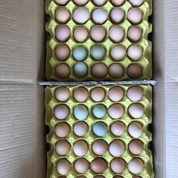 初生蛋 中粉12個一斤   雞廠直發  破損包賠