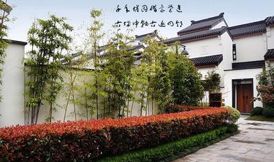 江蘇省蘇州市蘇州工業園區毛竹種子 上海買賣竹子批發