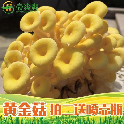 广东省广州市荔湾区黄金针菇 大菌包