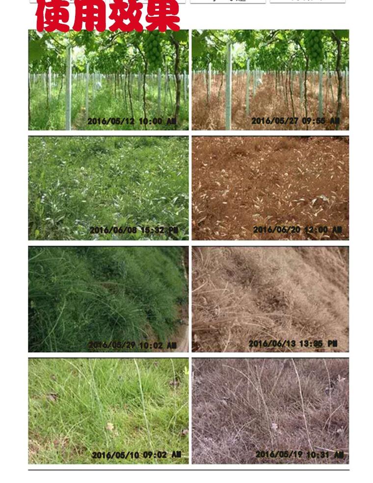 95%草甘膦除草劑 斬草除根 雜草荒地果園用農藥除草劑