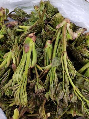 遼寧省撫順市新賓滿族自治縣刺老芽 全是自己上山采的純綠色食品!想要的快來聯系我吧!