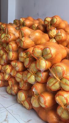 湖南省永州市江永縣 柚子,棋橙