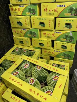 上海浦東新區紅富士蘋果 75mm以上 紙袋 條紅