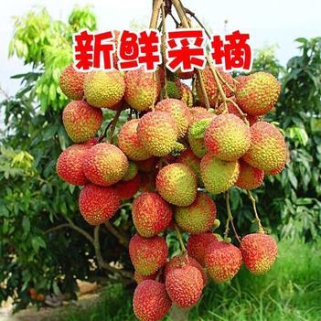 【特价包邮】妃子笑 海南妃子笑荔枝 新鲜当季水果批发