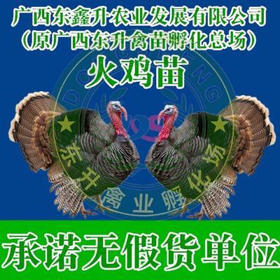廣西壯族自治區南寧市西鄉塘區 貝蒂娜火雞苗——承諾無假貨單位