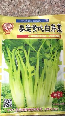 四川省成都市新都區 芹菜種子,泰國二黃芹菜種子