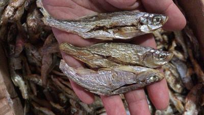 江西省九江市潯陽區小魚干 無鹽魚干破肚烘干魚干小白條餐魚干