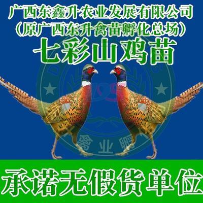 廣西壯族自治區南寧市西鄉塘區 山雞苗——承諾無假貨單位