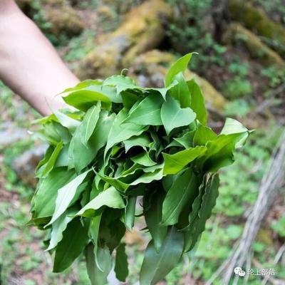 四川省雅安市雨城區 鹿耳韭又叫 天韭,純天然綠色食品、生長在原始森林里野菜。