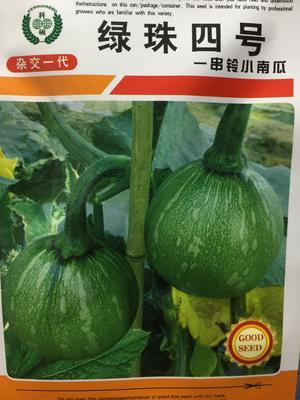四川省成都市成華區 一串鈴小南瓜種子,雜交一代抗病高產