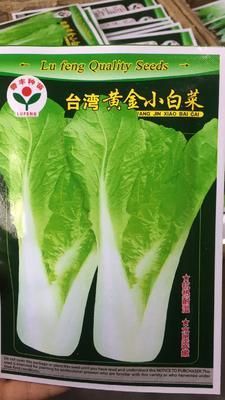四川省成都市成華區 四季小白菜種子,耐熱耐寒